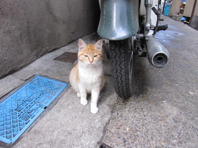 ひいてる子猫2