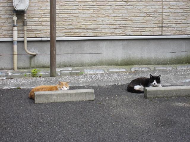 ネコ2匹1