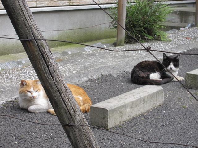 ネコ2匹2