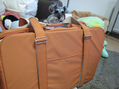 このバッグで行くのだ!