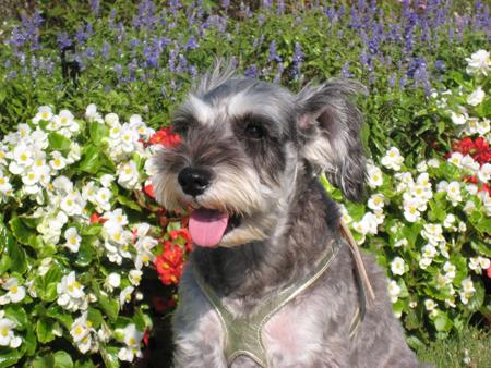 春の花とディア