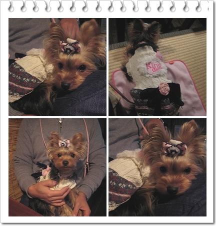 2cats_20110124133026.jpg