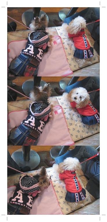 3cats_20110122214458.jpg