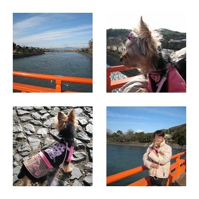 cats_20110105095452.jpg