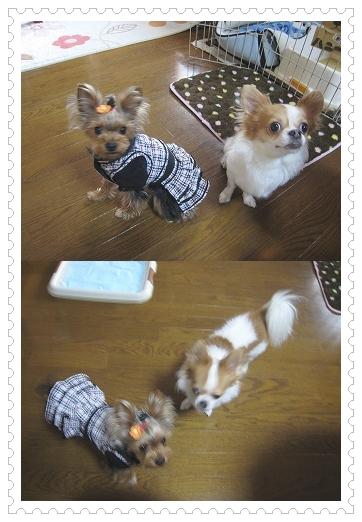 cats_20110210133736.jpg