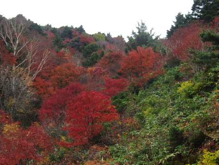 浄土平の紅葉
