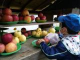 隣のリンゴ屋さん③