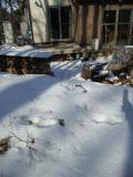 家の前のウサギの足跡