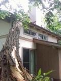 家を木が直撃