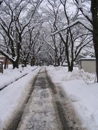 H220310雪の並木