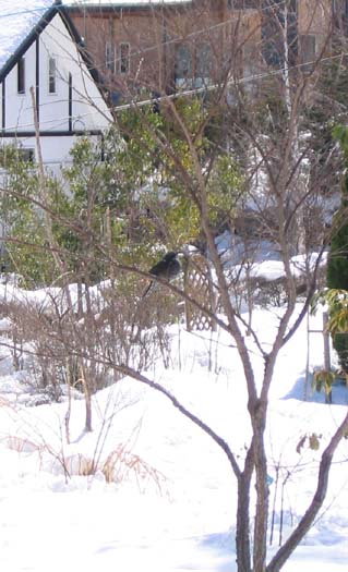 H220311雪と鳥