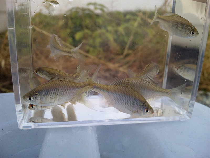 nipponbara・2010・11・11
