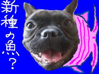 snap_kayo0316_20105219255.jpg