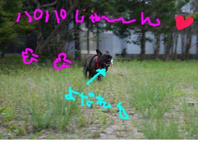 snap_kayo0316_20106513563.jpg