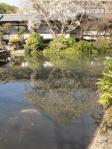 放生池とメダカ
