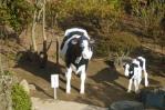 牛を見つけました