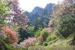 八重桜は満開