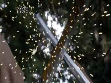 Samurai Sentai Shinkenger Act 39 2.avi_000020854