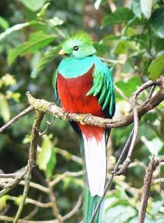 440px-Quetzal01.jpg