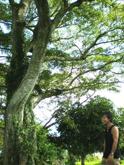 大木と革屋さん