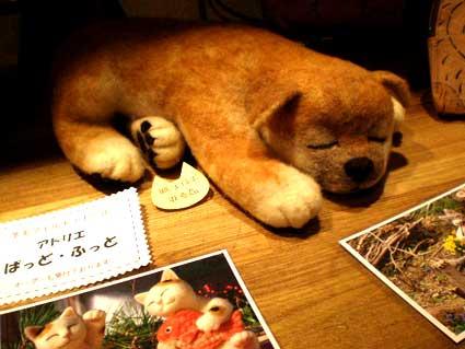 菊池眠るわんこ