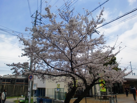 20100403sakura.jpg