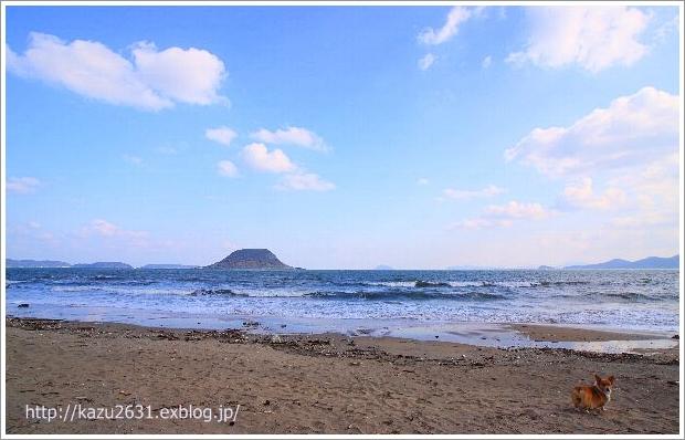 東の浜 犬 散歩 朝日 (1)