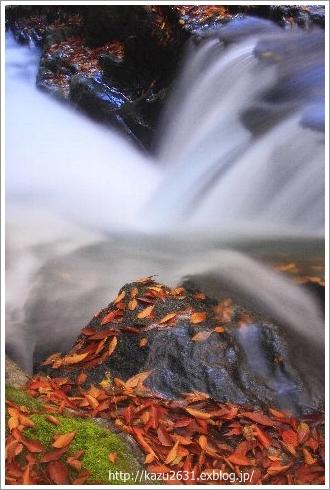 菊池渓谷 木の葉 (1)