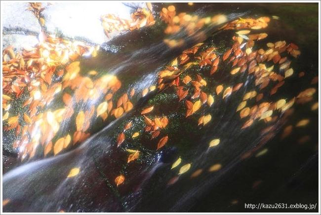菊池渓谷 木の葉 (2)