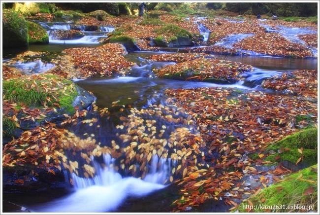 菊池渓谷 木の葉 (3)