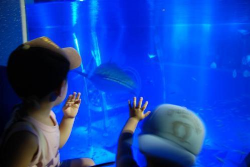 のとじま水族館4