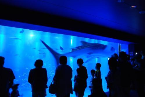 のとじま水族館5