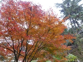紅葉がきれいです