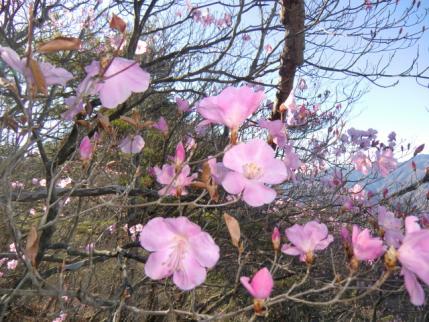 咲き始めでキレイな色