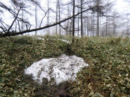 賽の河原手前でも残雪