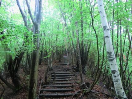 登山口の階段、晴れてれば新緑がねえ