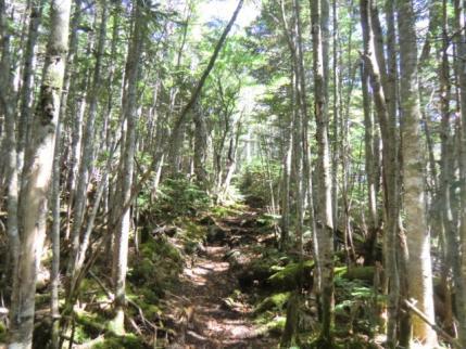 三宝山への巻き道