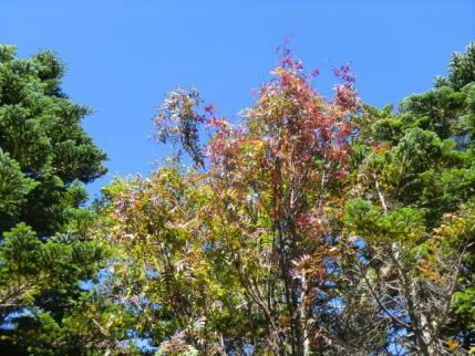 三宝山頂の紅葉