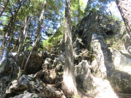 白岩山への上り道