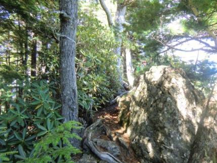 石楠花のヤセ尾根帯