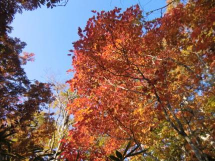 新道の途中の紅葉