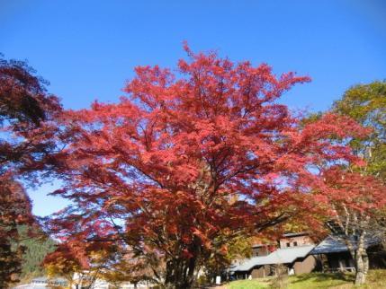 榛名湖畔の紅葉1