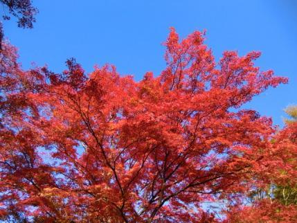 榛名湖畔の紅葉2