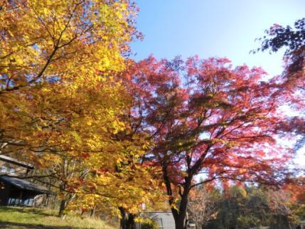 榛名湖畔の紅葉3