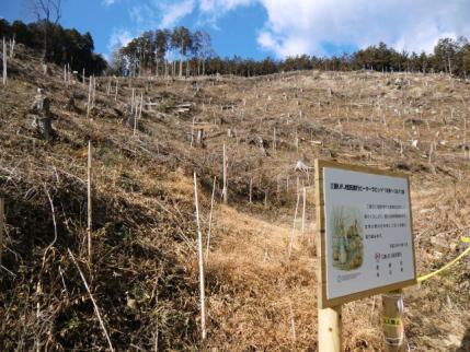 伐採地、これから整備