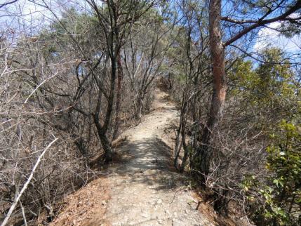 赤松の尾根道
