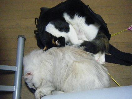 り:まだアタチは子猫でちよ