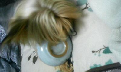 目立たないように顔を隠して。。。皿を?