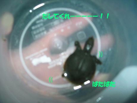 2010年01月10日_DSCN5552