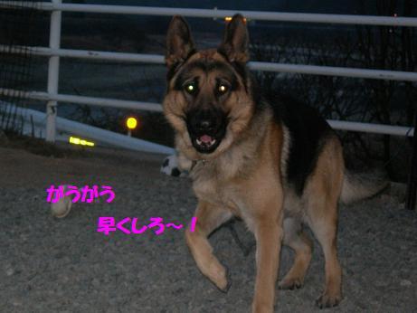 2010年01月11日_RSCN5613